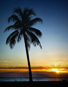 Postcard worthy sunrise with a palm tree.