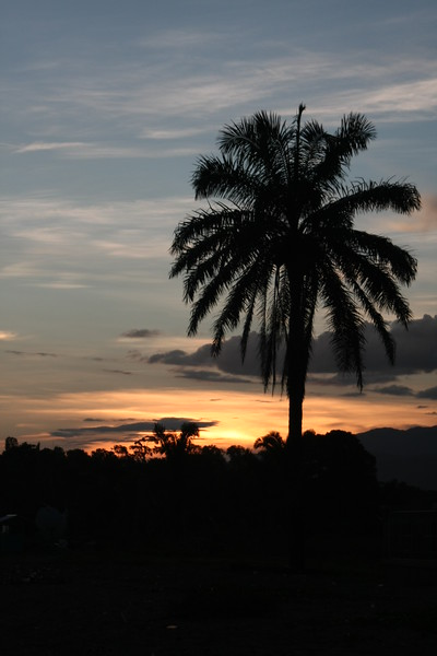 Sunrise Palm, Honduras, Central America