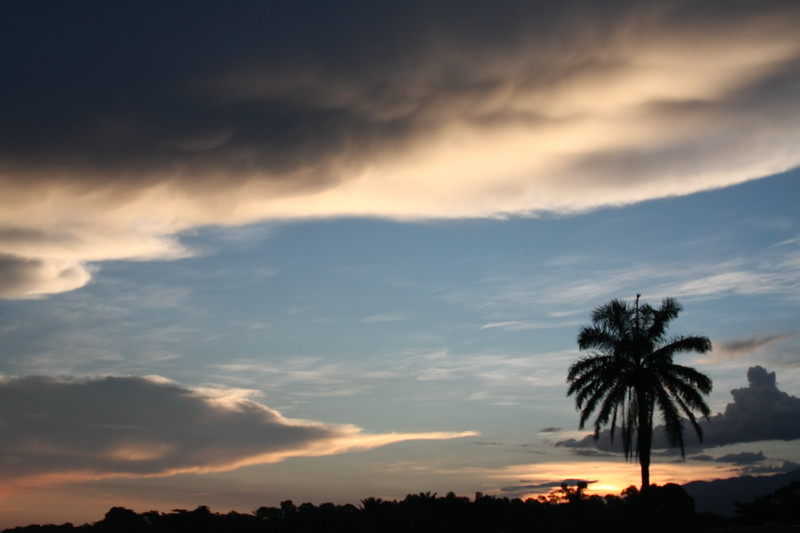 Sunrise Palm I, Honduras, Central America