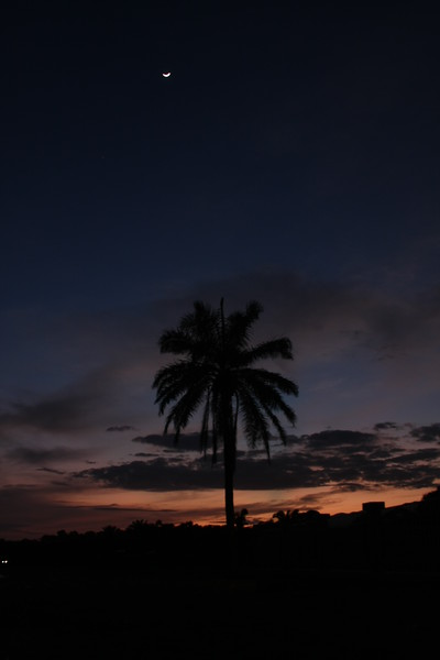 Sunrise Palm III, Honduras, Central America