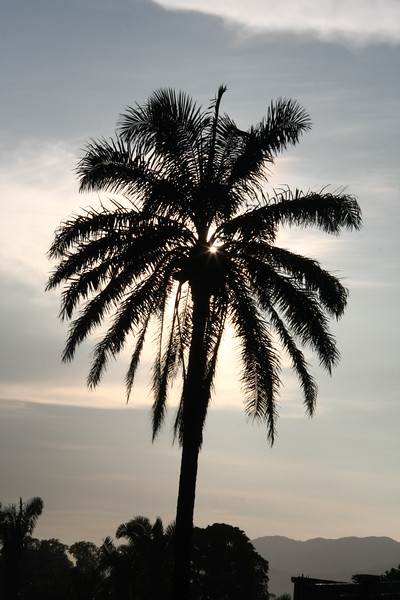 Sunrise Palm II, Honduras, Central America