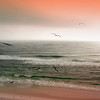 Gulls on beach, Fort Walton Beach, Florida