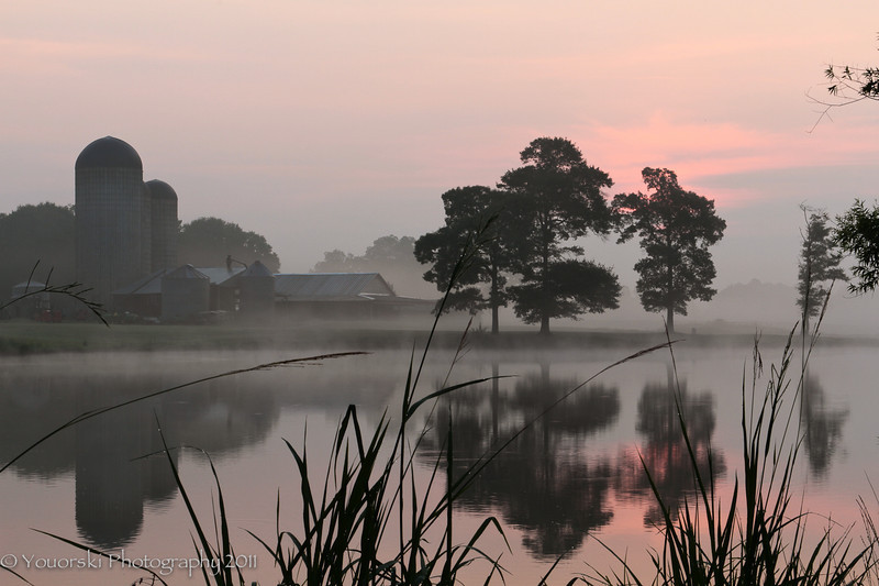 Pink mist at Morgan Dairy