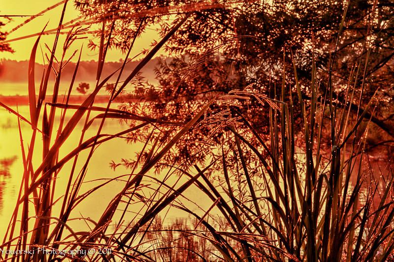Grasses 7 18 11