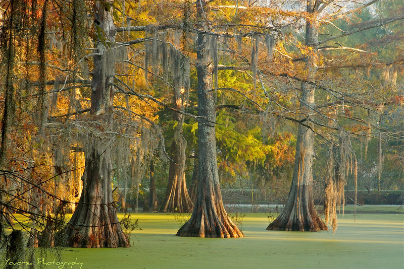Bayou Wilderness