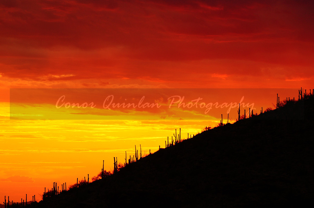 Nature Photography: One of the most captivating moments of nature is the sunrise and sunset.
