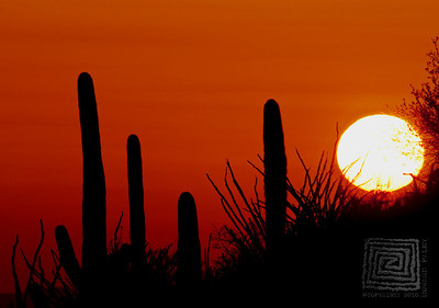 HHP_SunsetSonoran_4880