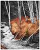 Cut Face Creek<br /> Cook County<br /> 11x14 Print, Mat 16x20<br /> $95.00