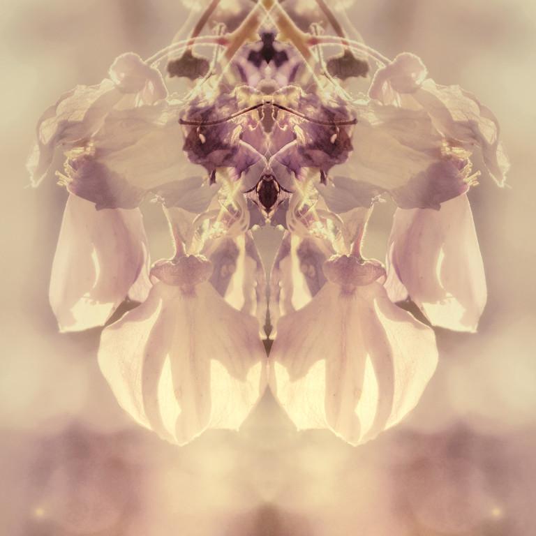 wistfuleria