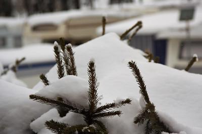 Needles and snow - GoldenPass Line
