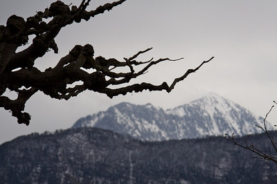 Tree and mountains - Lake Lucerne