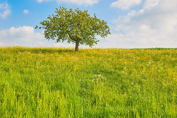Of Tree And Grass