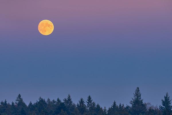Luna Obscura