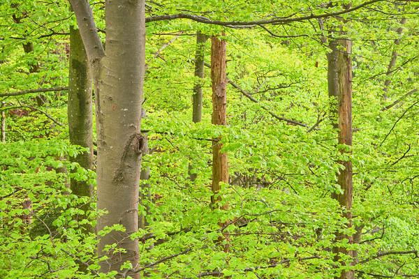 Spanholz Green