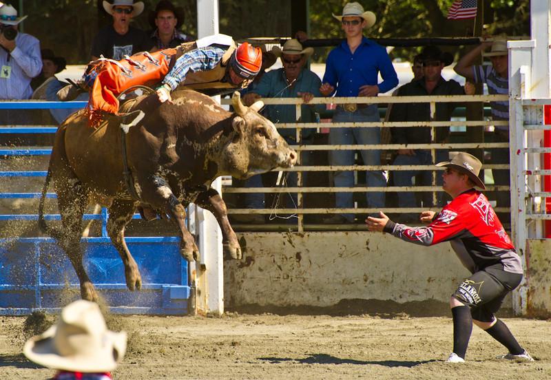 bull-riding-3396