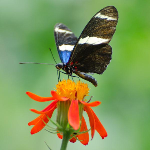 butterfly-2166