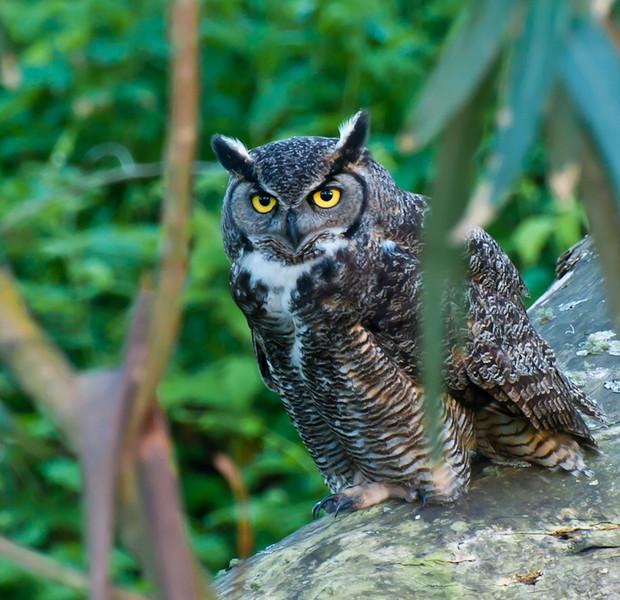 owl-7010