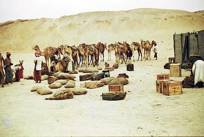 Mirfa B Sqn 56:57 resupply camel party for Liwa post -3