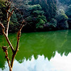 <h4> Calming Waters</h4>Kyoto, Japan