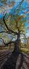 sugar grove tree ladder13