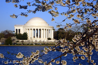 The jefferson and cherry blossoms - Washington, DC ... April 2, 2007 ... Photo by Rob Page III