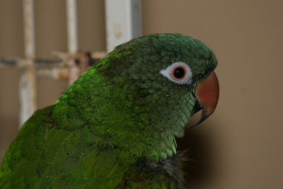 Boo, my parrot.  He doesn't really belong here, but was just in the batch of photos I offloaded from the camera.