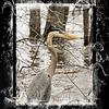Mud_Lake Warb_Herons_Ducks-706tndciStxt
