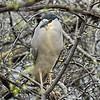 Mud_Lake Warb_Herons_Ducks-740tndi