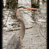 Mud_Lake Warb_Herons_Ducks-724tndiS