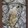 Mud_Lake Warb_Herons_Ducks-775tndciS