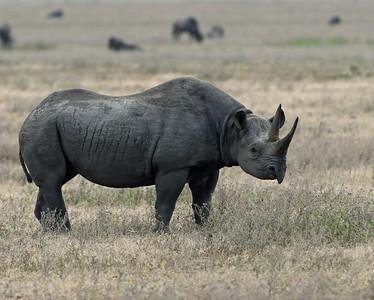 Rhino 3, Ngorongoro Crater National Park, Tanzania