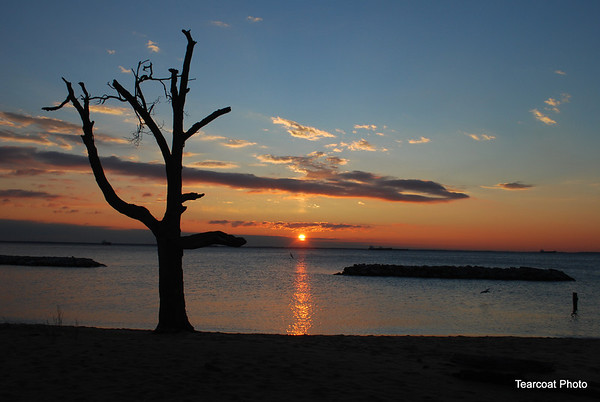 Living Driftwood Tree at sunrise looking over the Chesapeake Bay. Taken at the Chesapeake Bay Foundation in Bay Ridge Anne Arundel County, near Annapolis Maryland. This tree is no longer there.
