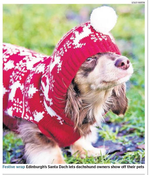 Dachshund Santa Dash - The Times