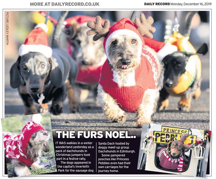 Dachshund Santa Dash - The Daily Record