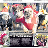 Dachshund Santa Dash - The Daily Record