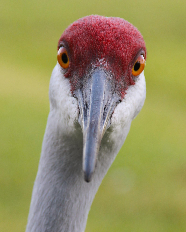 Sand Crane up close and personal.