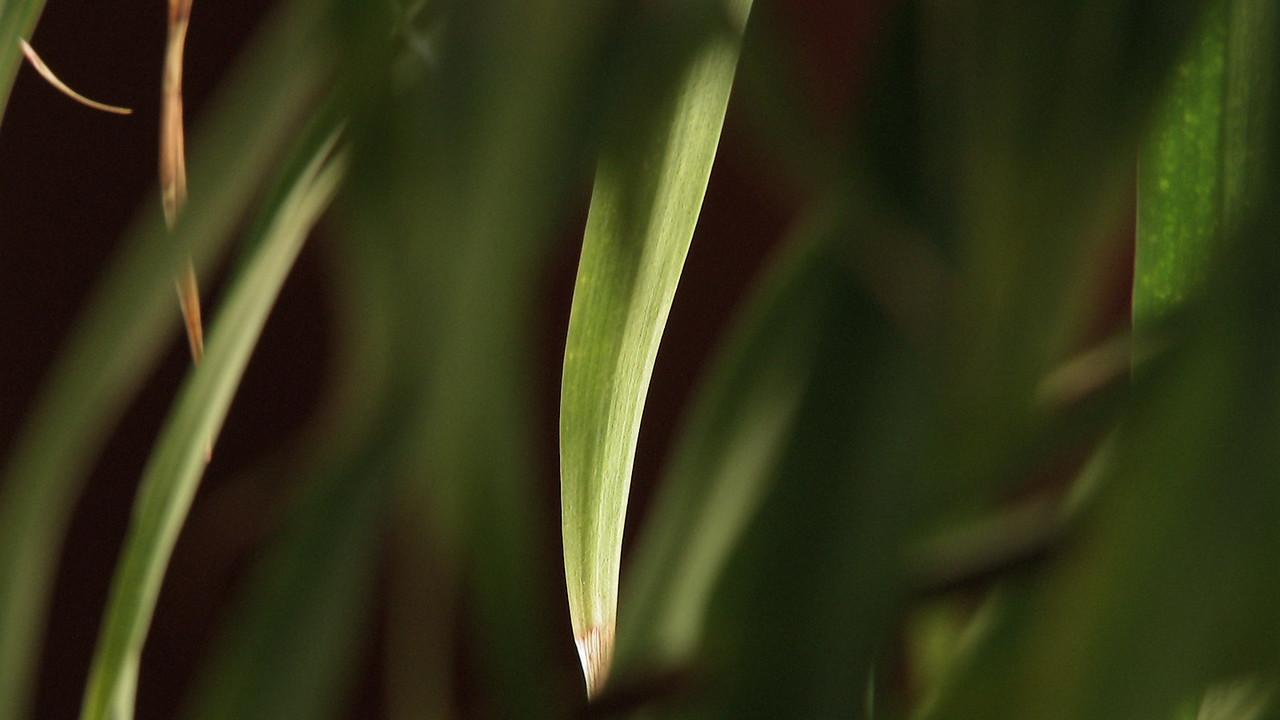 One leaf.