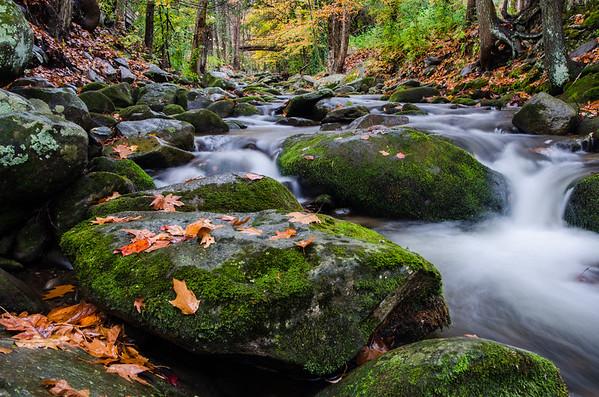 Smoky Mountains-591