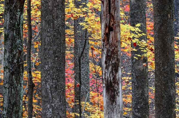 Smoky Mountains-477