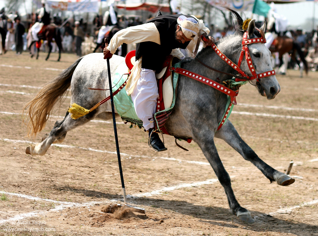 Galloping horse towards its target, tent pegging is popular sport across Punjab in Pakistan.
