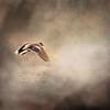 Ducky over Lake Conroe