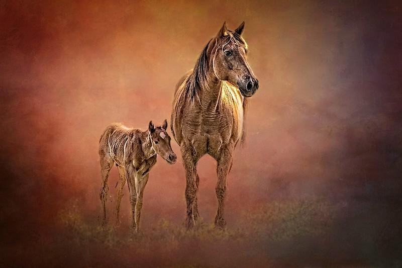 Mare and Son in Huntsville, Texas