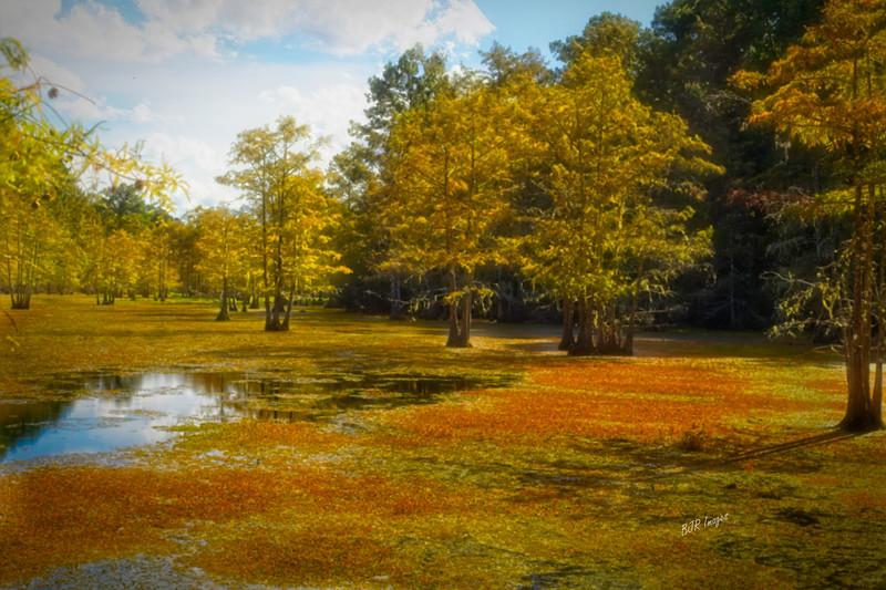 Fall Bayou