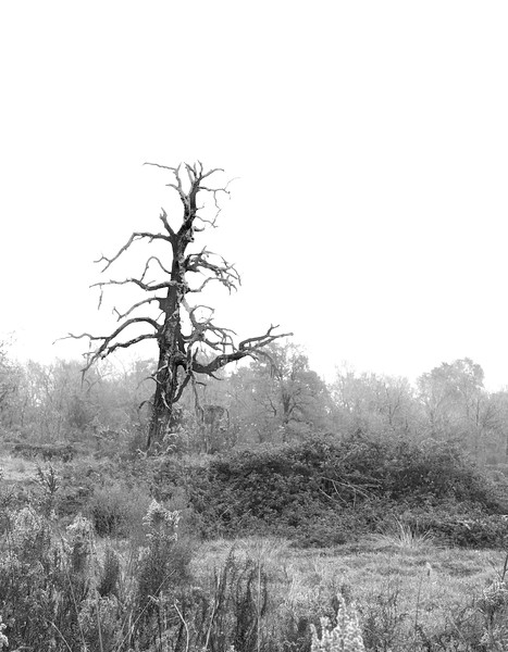 Texas Spooky Old Tree