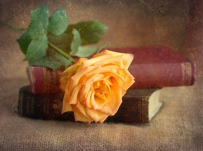 Still Life, Words & Textures