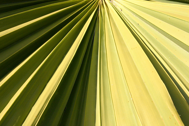 Palm Frond The uneven surface of a palm frond in mid-afternoon makes for an interesting interplay of light and shadow, I think