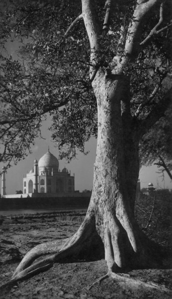 Taj Mahal and the tree