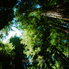Muir Woods Nat'l Park, California
