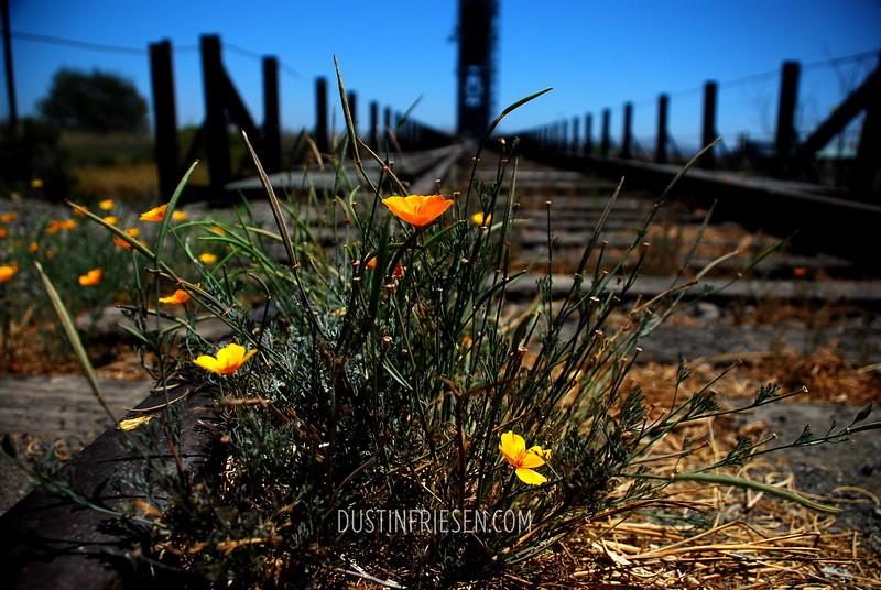 Nappa, California