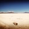 Salt Desert, Utah